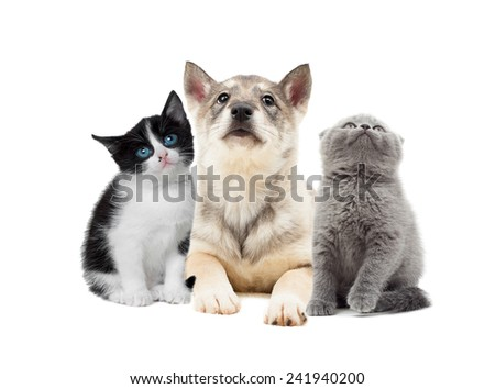 cute puppy and kitten looking up