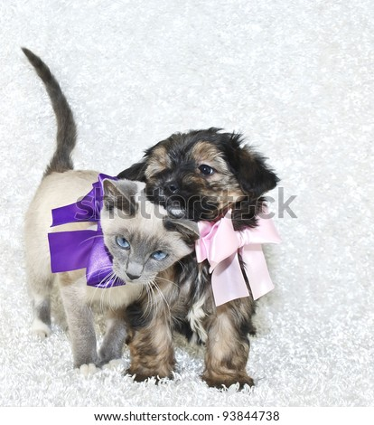 Cute puppy and kitten loving on one another, both wearing pretty bows on a white background with copy space. - stock photo