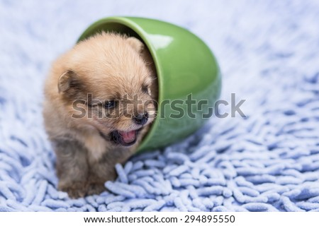 Cute puppy crawling out of a glass on a soft carpet. - stock photo