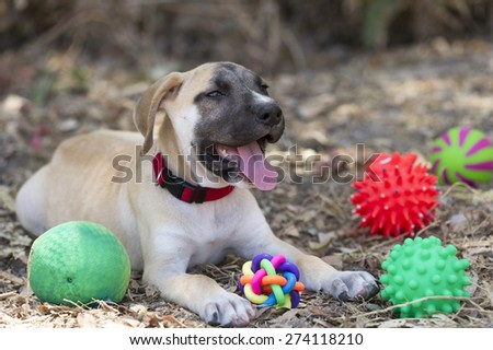 Cute puppy dog and toys outdoors happy and content.  - stock photo