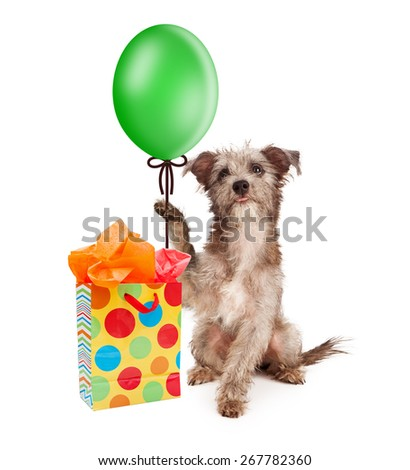 Cute puppy dog holding a green party balloon with a colorful birthday gift bag - stock photo