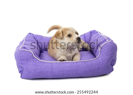 Cute puppy dog in its bed against a white background - stock photo