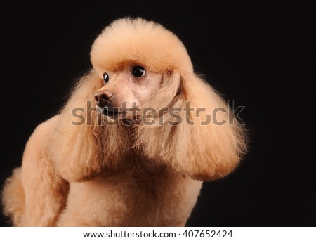 cute puppy dog isolated over black background - stock photo