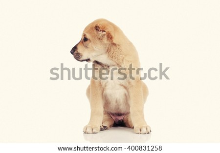 cute puppy dog isolated over white background - stock photo