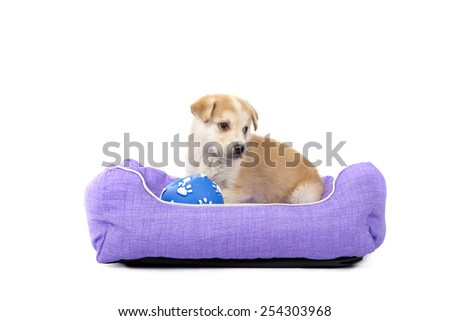 Cute puppy dog playing in a bed with a ball toy against a white background - stock photo