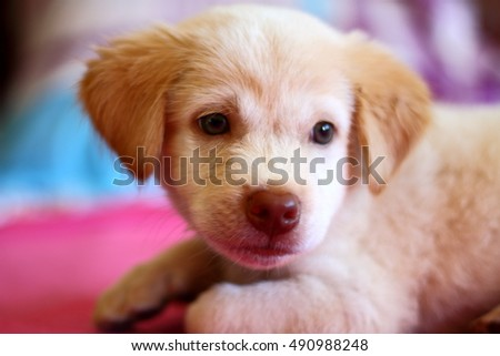 Cute puppy dog resting on bed sheet