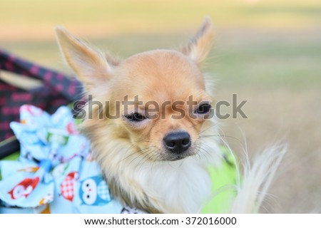 Cute puppy, dog - shallow depth of field - stock photo