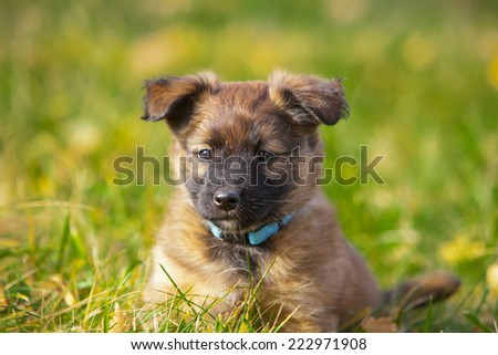 cute puppy dog sitting in the grass - stock photo
