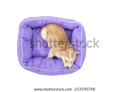 Cute puppy dog sleeping in his bed against a white background - stock photo