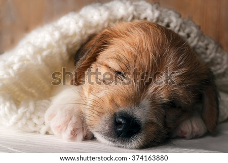 Cute puppy dog sleeping sweet and covered with soft knitted cloth - stock photo