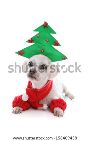 Cute puppy dog wearing a Christmas tree hat, red scarf and matching leg warmers.