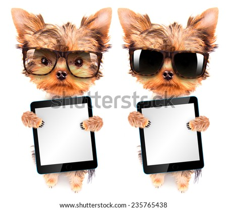 cute puppy dog wearing a shades and holding a blank tablet pc - stock photo
