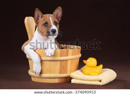 Cute puppy dogs in a wooden basin