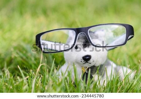 Cute puppy doll on green grass outdoor. - stock photo