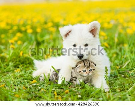 Cute puppy embracing a kitten on a dandelion field - stock photo