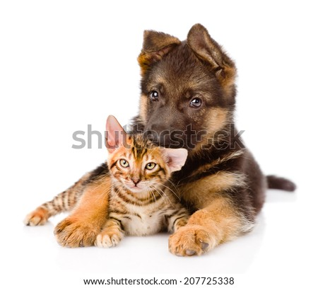 cute puppy embracing little kitten. isolated on white background - stock photo