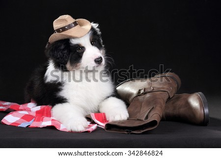 Cute puppy in a cowboy hat - stock photo