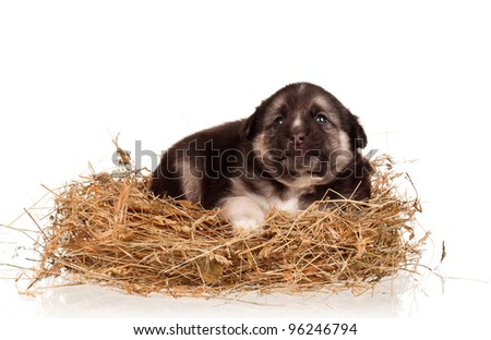 Cute puppy in a nest on a white background