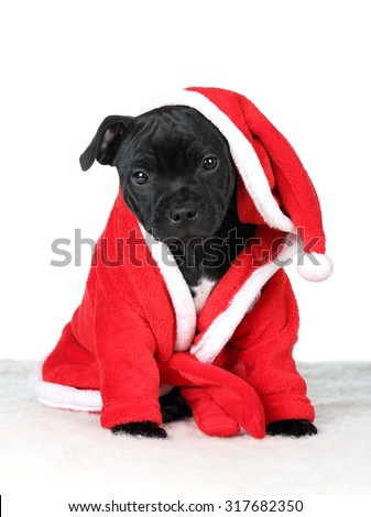 Cute puppy in a red dressing gown on a white background - stock photo