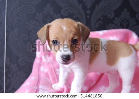 cute puppy in basket