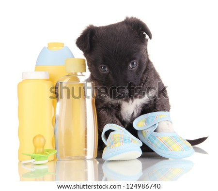 Cute puppy in blue baby booties isolated on white - stock photo