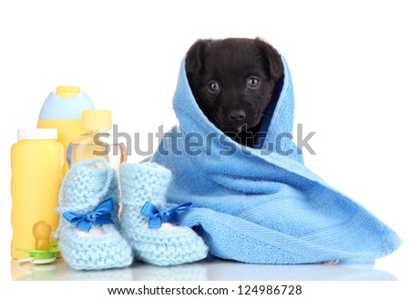 Cute puppy in blue towel isolated on white - stock photo