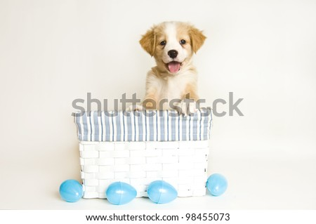 Cute puppy in Easter basket with eggs