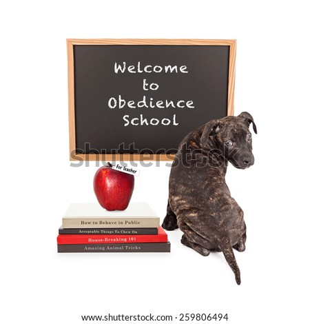 Cute puppy in front of a chalk board that reads Welcome to Obedience School with a pile of dog training books and an apple for the teacher.  - stock photo