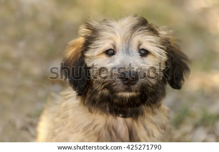Cute puppy is a closeup of an adorable fluffy puppy dog outdoors. - stock photo