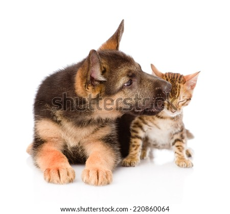 cute puppy kisses ittle kitten. isolated on white background - stock photo