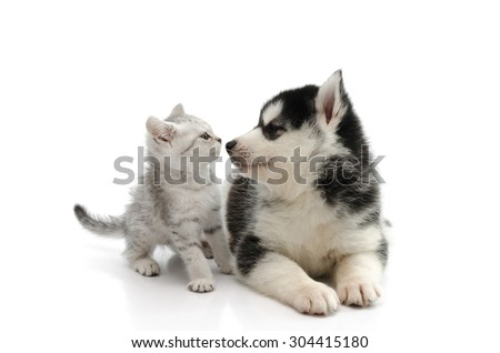 Cute puppy kissing cute tabby kitten on white background isolated - stock photo