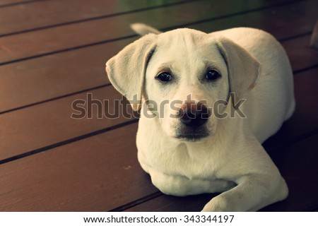 cute puppy looking curios