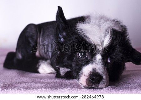 Cute puppy lying and looking to the right