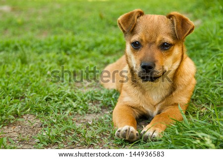 Cute puppy lying in the grass