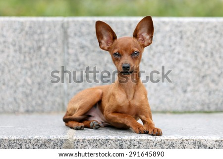 Cute puppy lying on a stone bench - stock photo