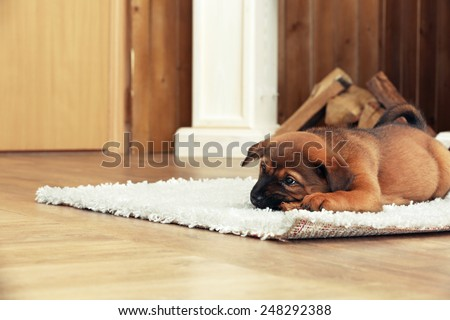 Cute puppy lying on carpet near fireplace in room - stock photo