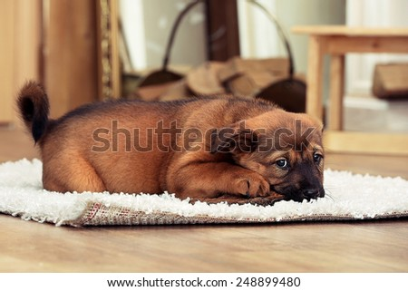 Cute puppy lying on carpet near fireplace in room