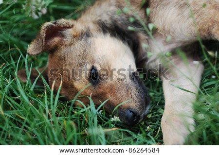 Cute puppy lying on green grass