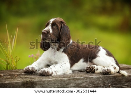Cute puppy lying on the nature - stock photo
