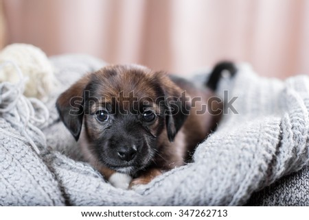 Cute puppy lying on the sofa