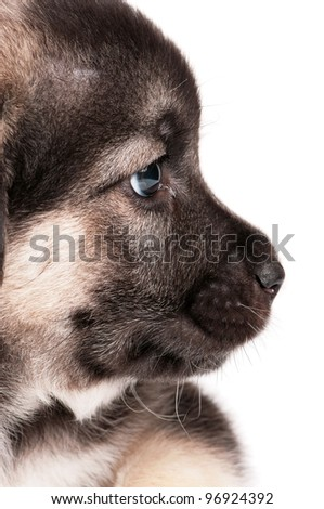 Cute puppy of 1,5 months old on a white background - stock photo