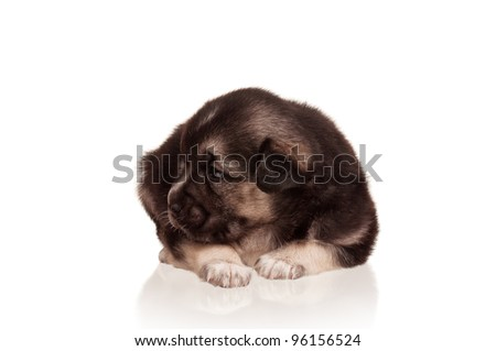 Cute puppy of 3 weeks old on a white background