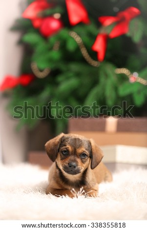 Cute puppy on carpet on Christmas background - stock photo