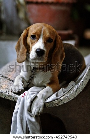 cute puppy on the bench