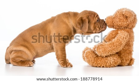 cute puppy reaching out to smell stuffed teddy bear - stock photo
