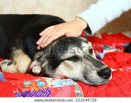 cute puppy shepherd on the bed - stock photo