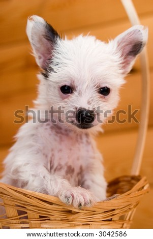cute puppy sitting in basket