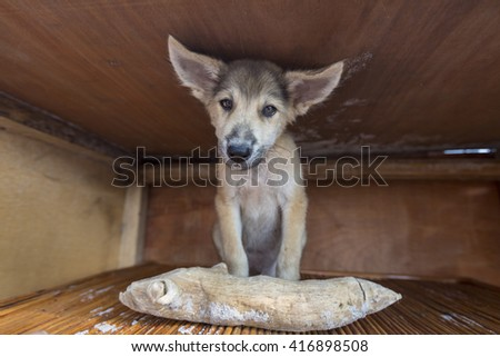 Cute Puppy sitting in his wooden box with large piece of wood in front of him and looking at the camera.