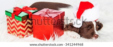 Cute puppy sleeping next to wrapped presents wearing Santa Claus hat. Sized to fit popular social media cover. - stock photo