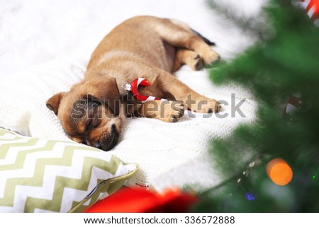 Cute puppy sleeping on pillow with Christmas decor - stock photo
